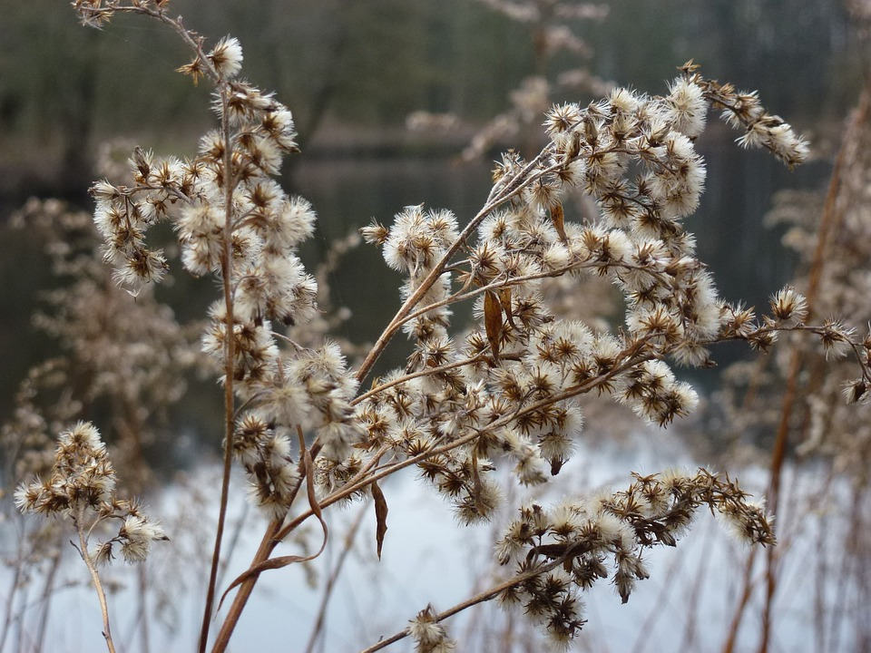 Bach Grass, Pond Grass, Grasses, Close, Winter