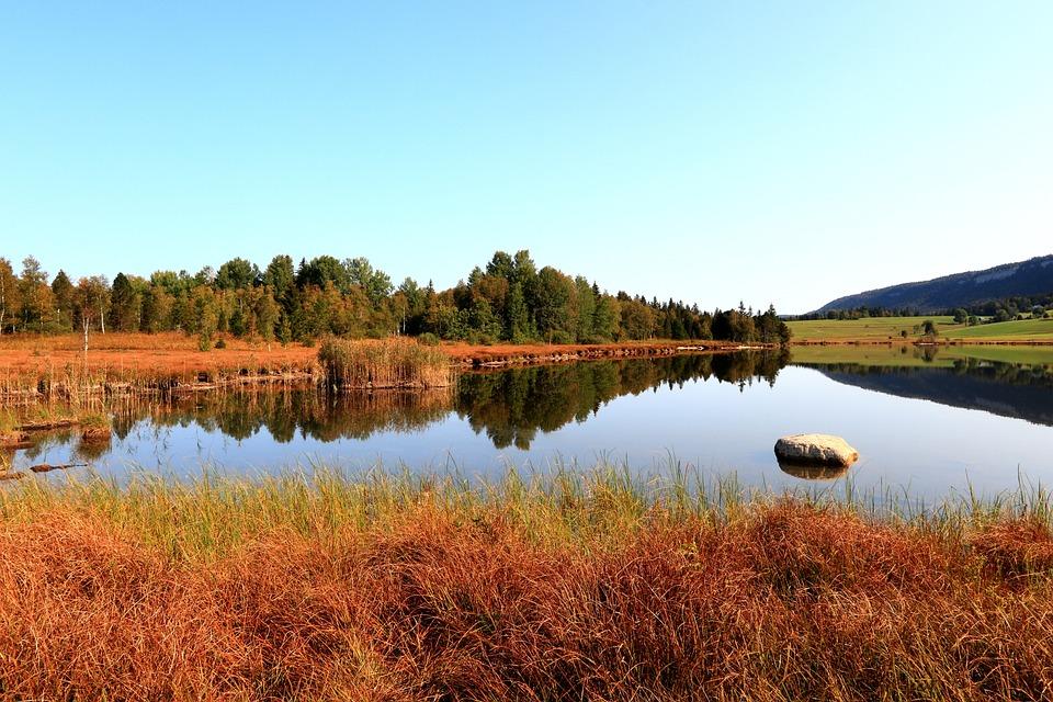 Pond, Bog, Marsh, Reflection, Grass, Trees, Landscape