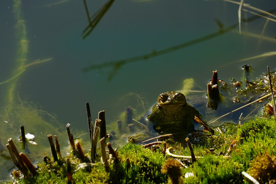 Waters, Nature, Toad, Pond