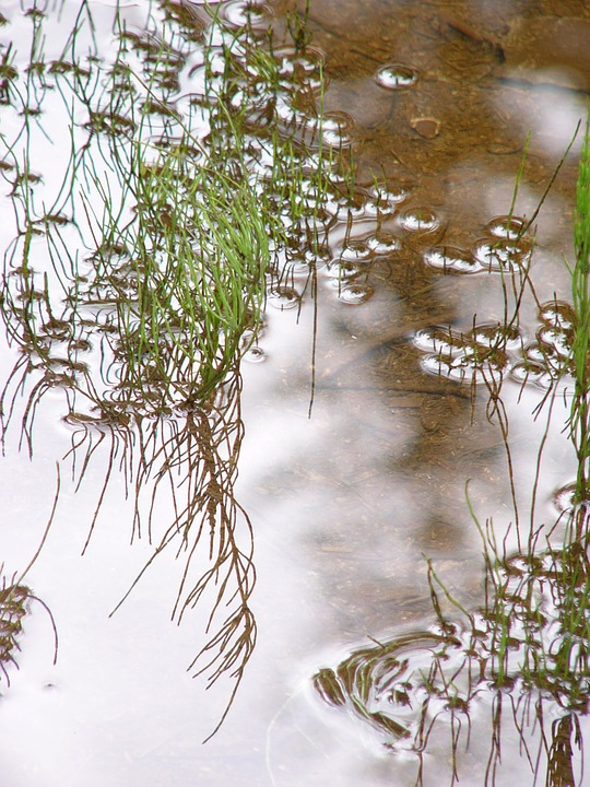 Pond, Water, Mirroring, Gloss, Reflection