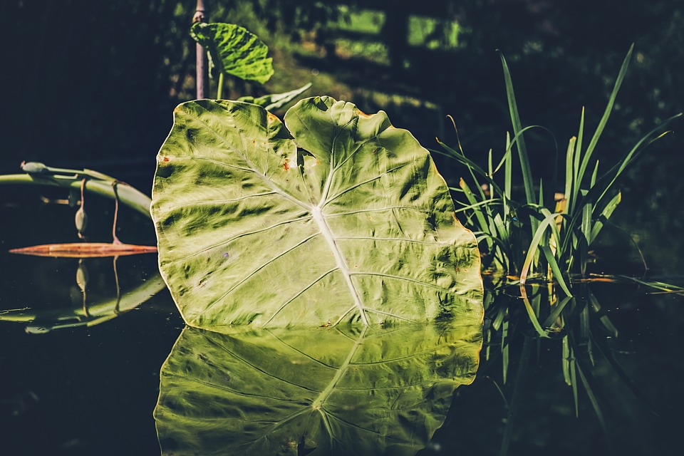 Leaf, Pond, Water, Reflection, Mirroring, Waters, Rest