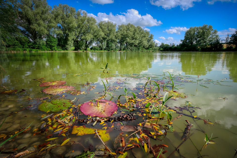 Lake, Pond, Mirroring, Bank, Rest, Seegewächse