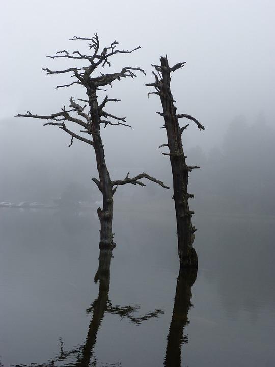 Dead Tree, Stump, Reflection, Lake, Water, Dream, Pond