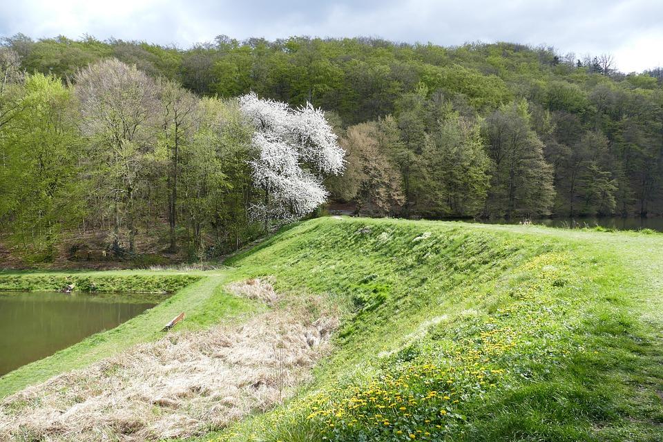 Landscape, Nature, Ponds, Monastery Fischer, Oesig