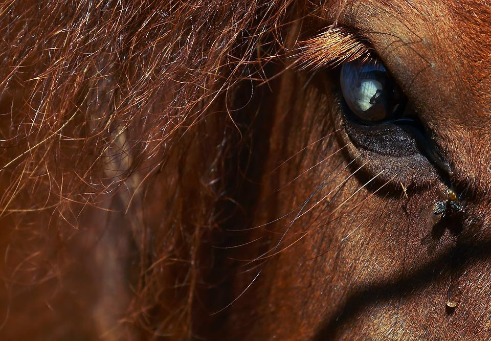 Horse, Pony, Animals, Animal, Mane, Brown, Nature, Look