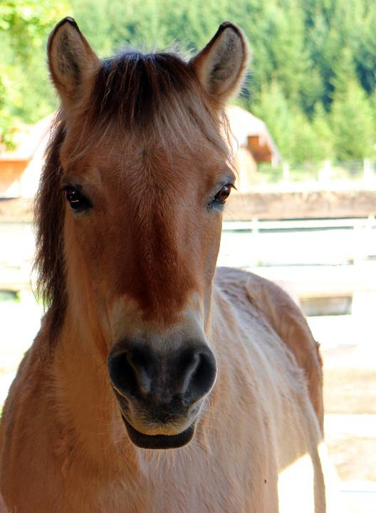 Horse, Pony, Head, Horse Head, Portrait, Close, Face