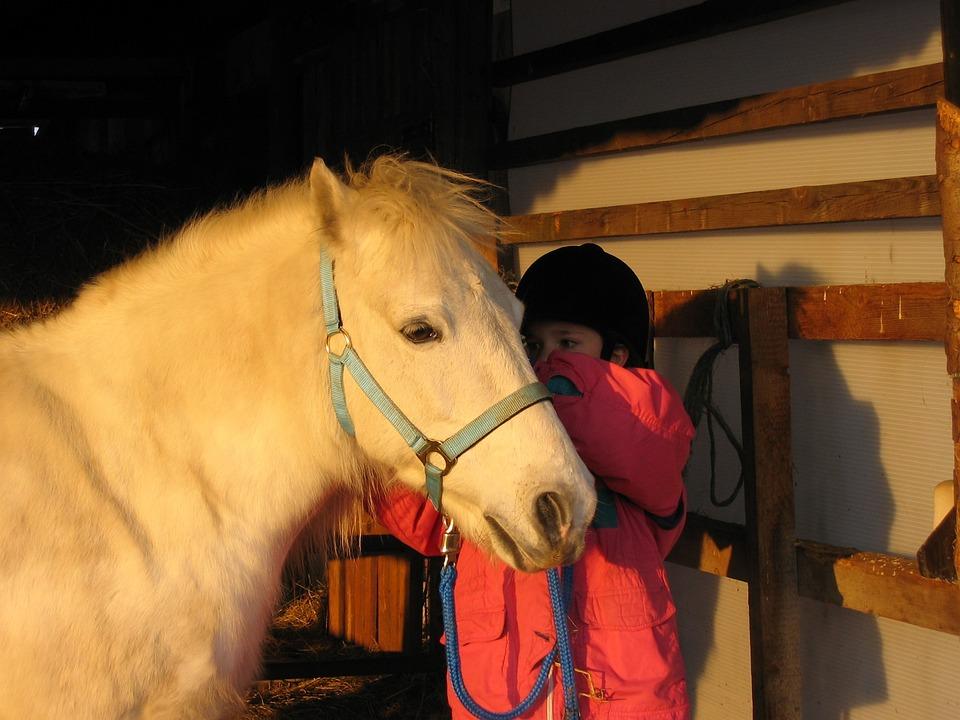 Pony, Mold, Little Girl, Sun, Child, Cute
