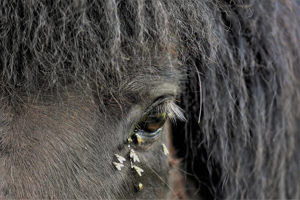 Horse, Pony, Animal, Mammal, Animal World, Fur
