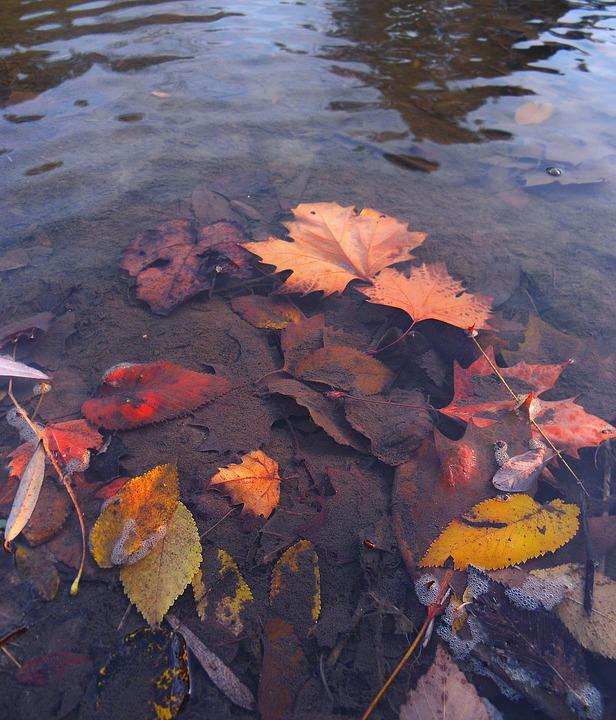 Leaf, Fall, Water, Pool, Lake, River, Nature, Park