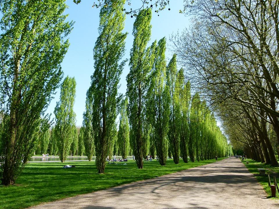 Sceaux, France, Landscape, Scenic, Trees, Poplars, Rows
