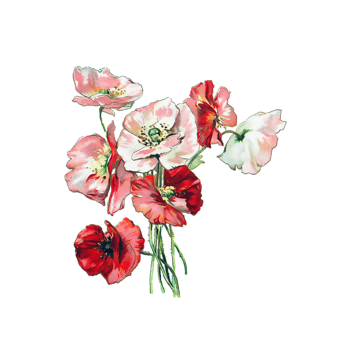 Flowers, Poppies, Poppy, Vintage, Nature, Red, Plant