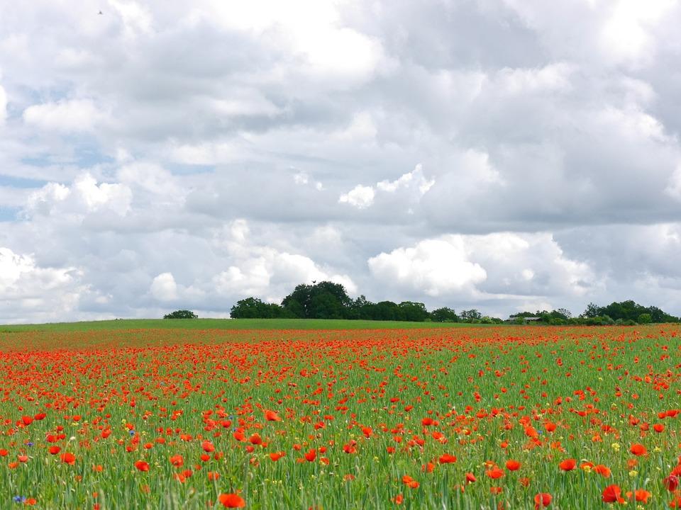 Clouds, Poppy, Meadow, Poppy Meadow