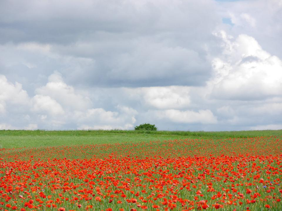 Clouds, Poppy, Meadow, Poppy Meadow