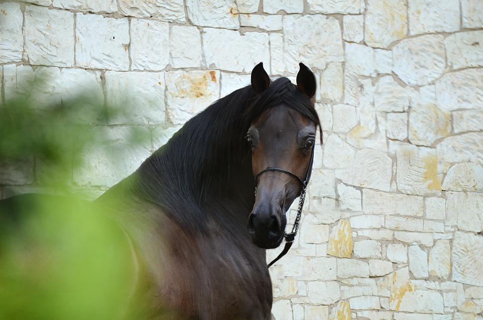 Horse, Equine, Head, Portrait, Beautiful Horse