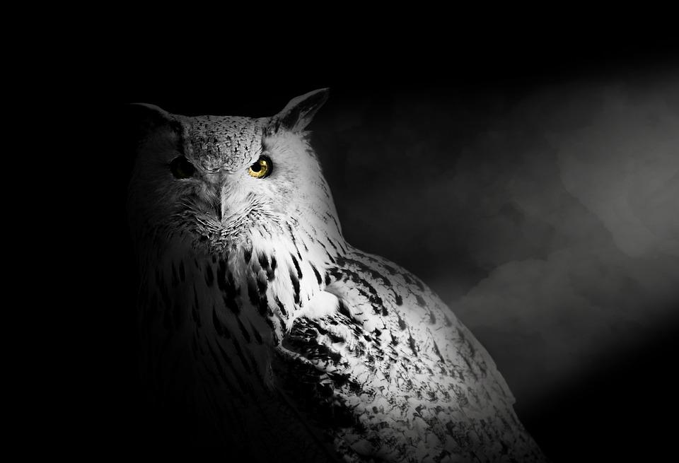 Owl, Owl Isolated, Owls, Portrait, Animal, Art, Bird