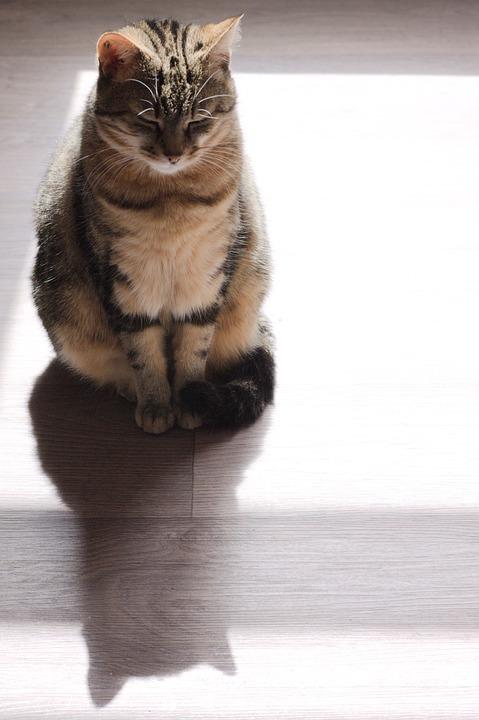 Cat, Animal, Portrait, Cute