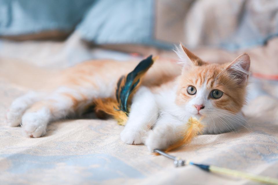 Cat, Kitten, Orange Cat, Portrait, Cat Portrait, Tabby