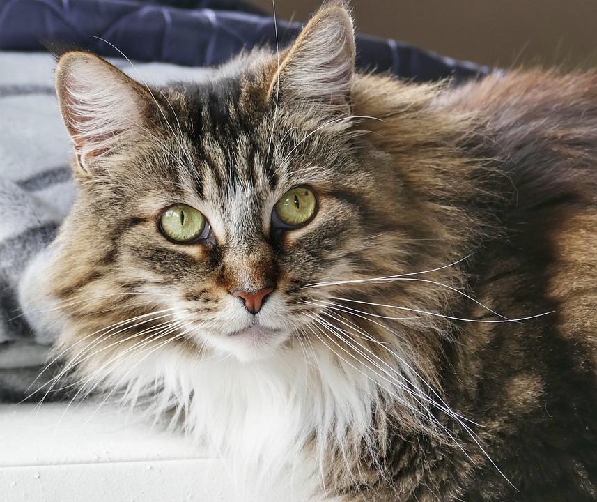 Cute, Cat, Animal, Kitten, Pet, Mammal, Portrait