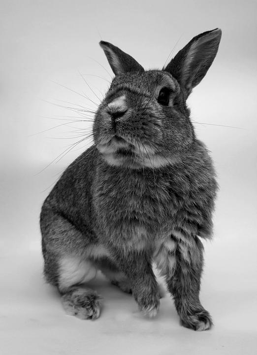 Rabbit, Cute, Portrait, Rodent, Small, Animal World