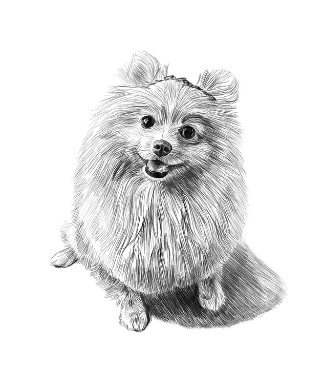 Dog, Pencil Drawing, Art, Portrait, Dog Lovers