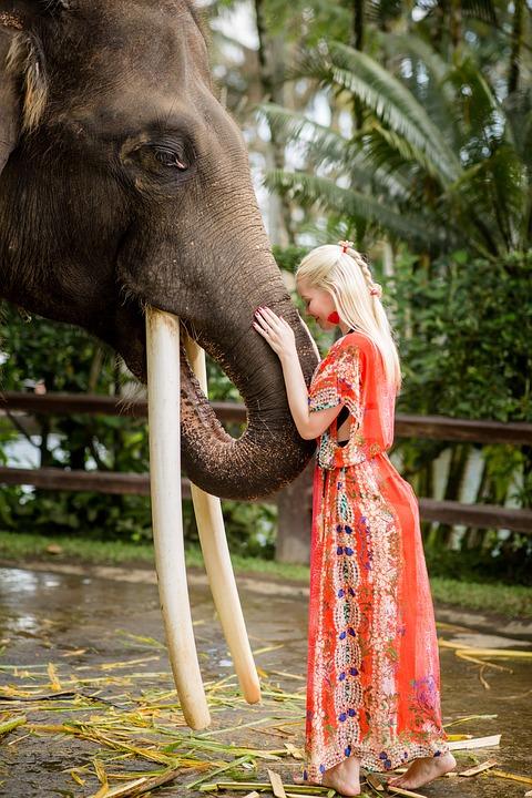 Female, Attractive, Elephant, Model, Portrait, Fashion