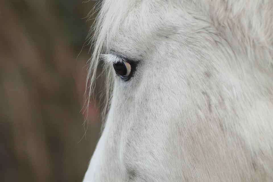 Horse Head, Horse, Mold, Portrait, Horse Eye, Friendly