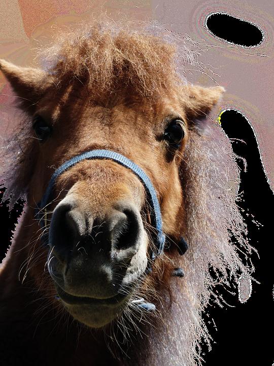 Horse, Animal, Mammal, Isolated, Head, Portrait, Ride