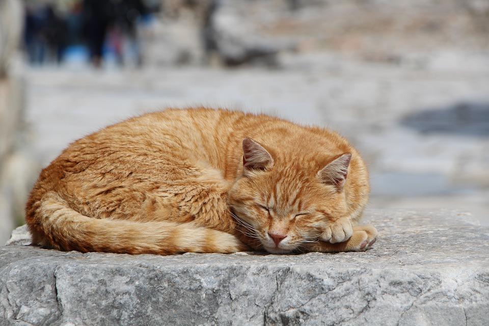 Cat, Nature, Animal, Portrait Izmir, Ephesus