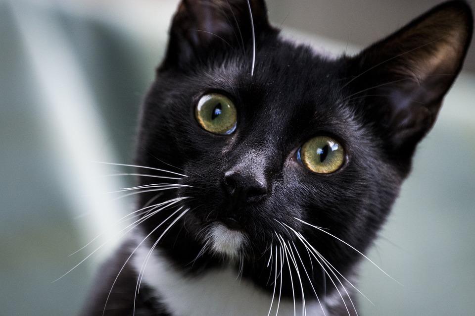 Pets, Cat, Animals, Charming, Portrait, Kitten, Mammals