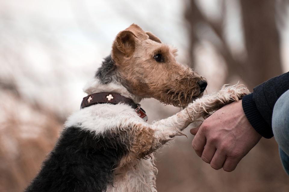 Dog, Mammal, Pet, Portrait, Cute, Animal, Trust, Human