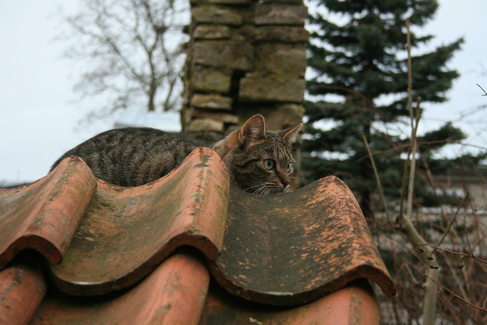 Old, One, Portrait, Nature, Outdoors, No One, Cat