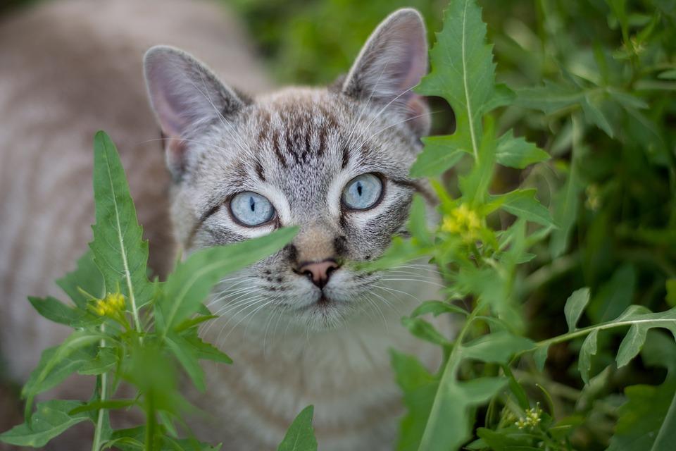 Nature, Animalia, Small, Nice, Outdoors, Cat, Portrait