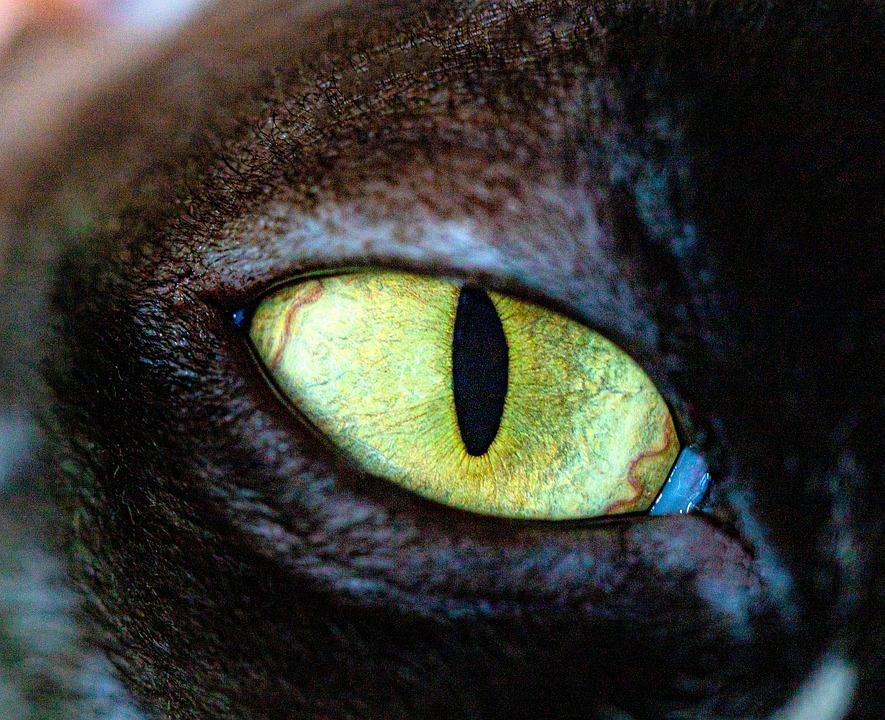 Cat, Eyes, Animals, Portrait, Feline, Open, Head, Watch