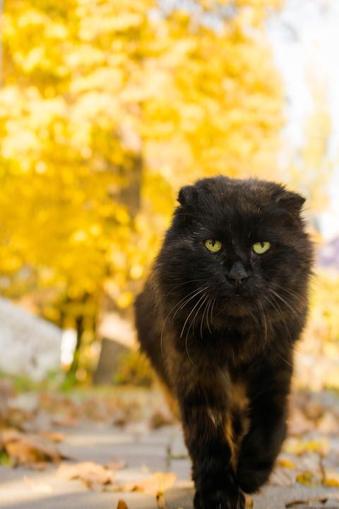 Cat, Pet, Portrait, Animal