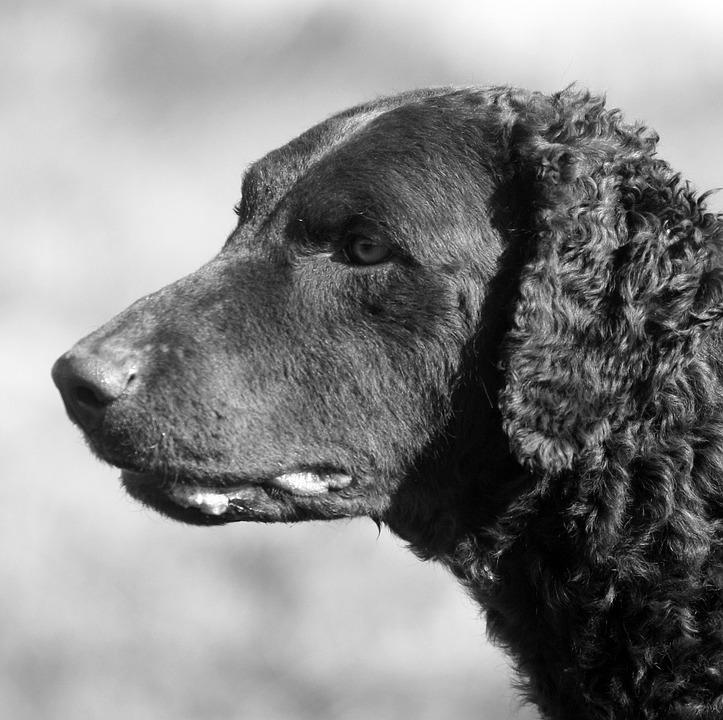 Dog, Portrait, Canine, Animal, Mammal, Cute, Pet
