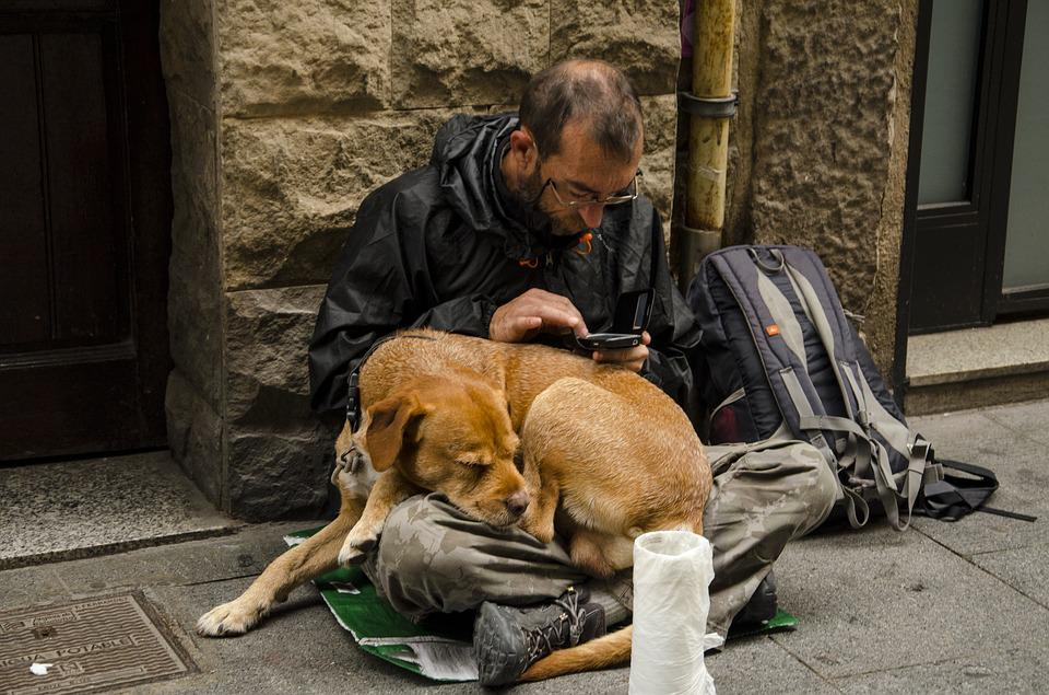 Dog, Homeless, Puppy, Animal, Pet, Stray, Portrait
