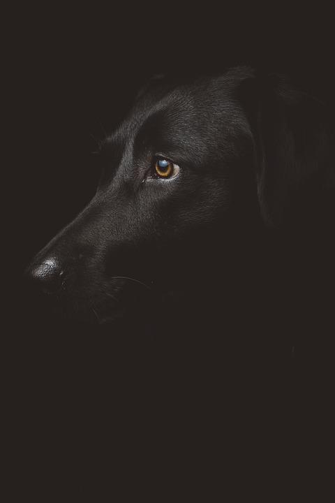 Black, Dog, Profile, Portrait, Head, Face, Black Dog