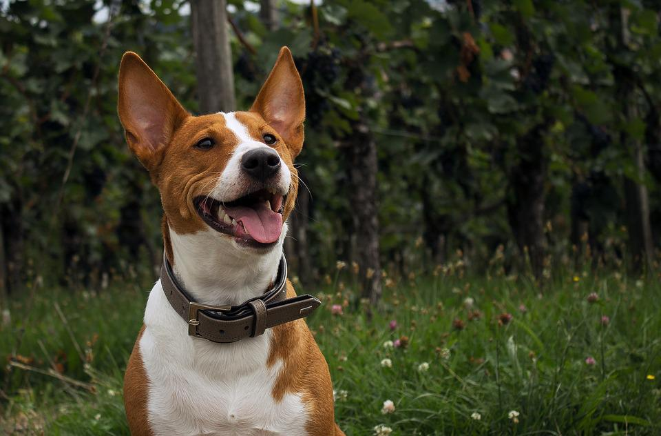Dog, Nature, Portrait, Pet, Young Dog, Fun, Hybrid, Run