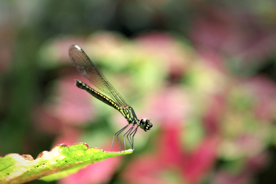 Dragonfly, Small, Portrait, Wing, Macro, Insects