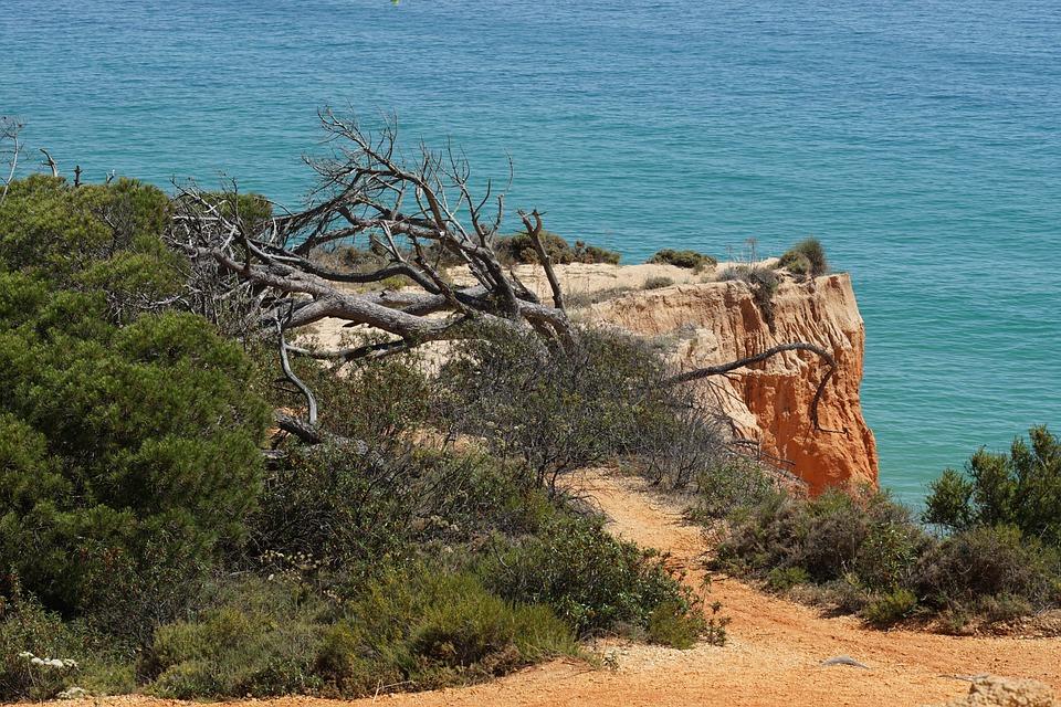 Algarve, Coast, Fallen Tree, Sea, Nature, Portugal