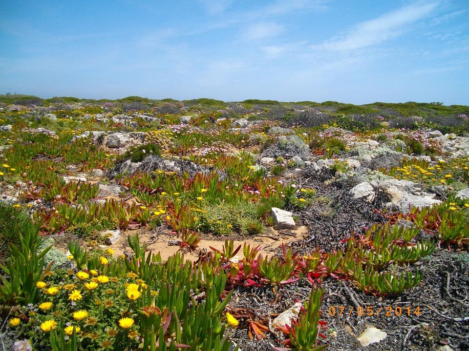 Portugal, Algarve, Coast, Nature