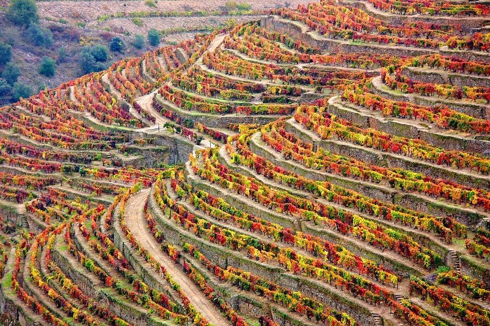 Winery, Douro, Portugal, Douro Landscape, Landscape
