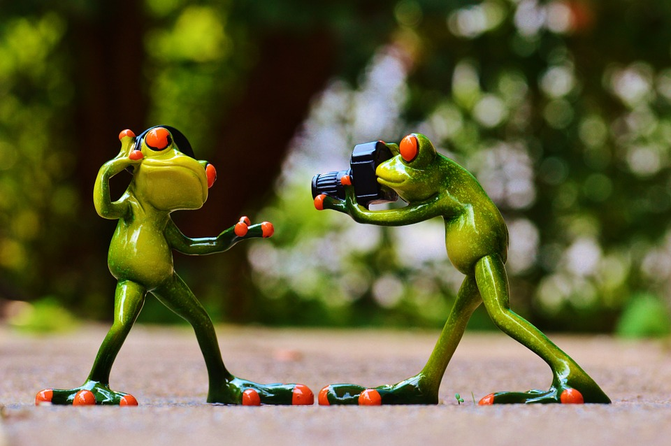 Frogs, Headphones, Music, Dance, Pose, Photographer