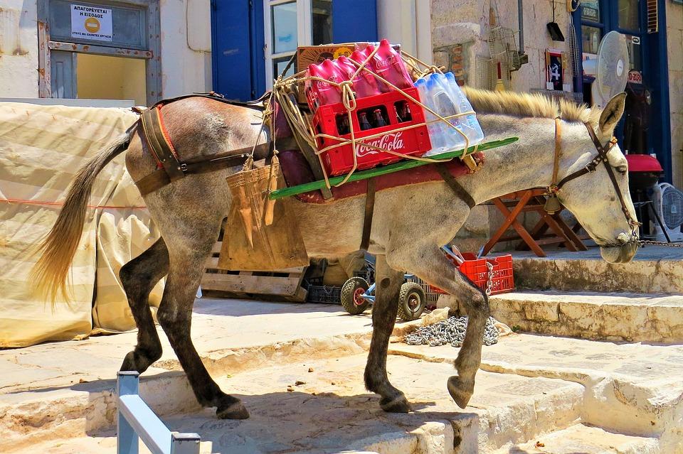 Mule, Load, Back In, Position, Hydra