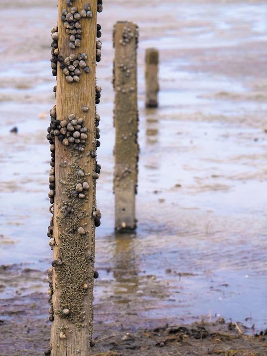 Water, Post, Snails, North Sea, Wooden Beams, Beach