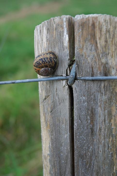 Snail, Pre, Post