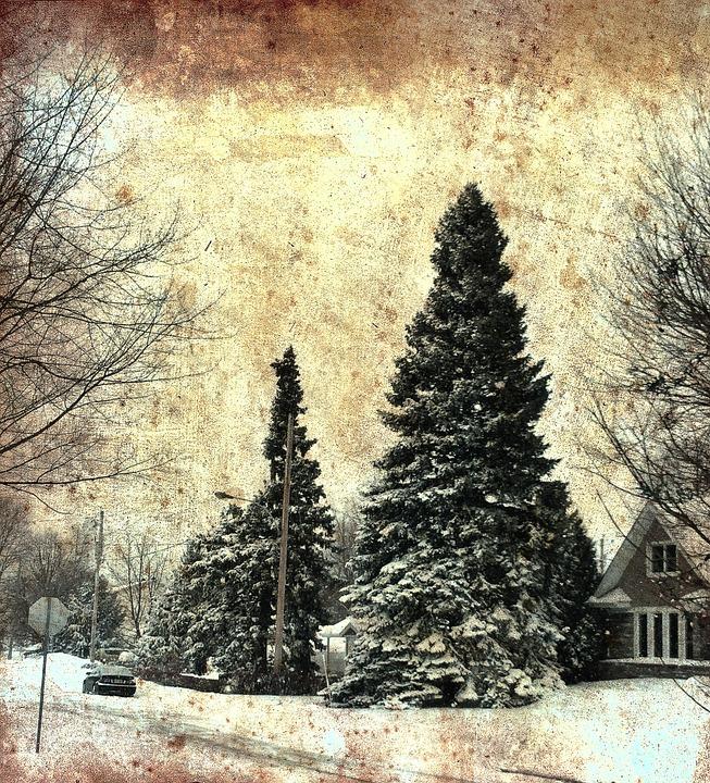Pine, Epinette, Sapin, Canada, Postal, Boucherville