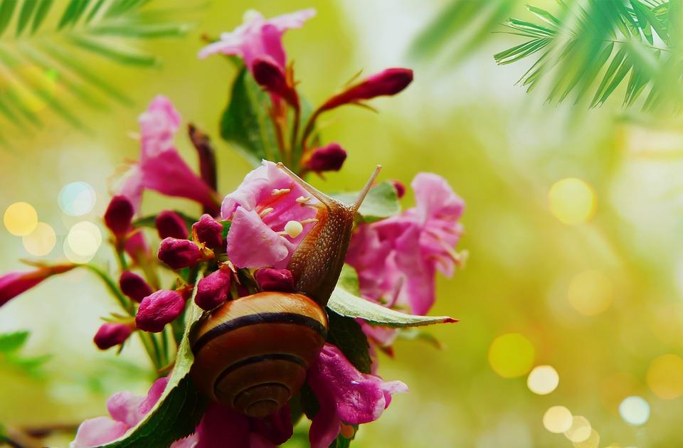 Wstężyk Huntsman, Molluscum, Flower, Jasmine, Posts