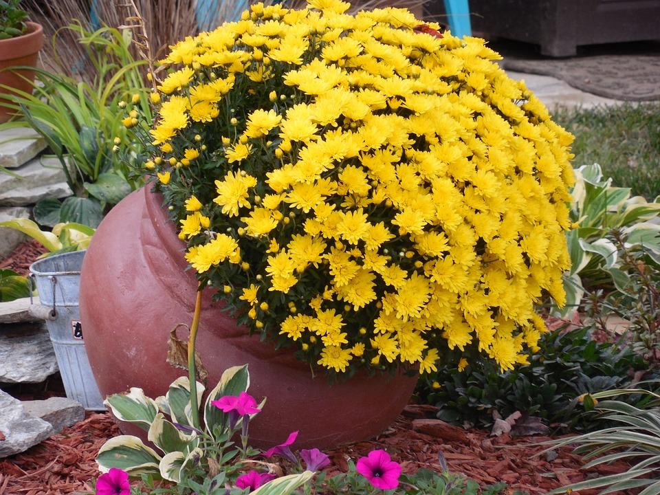 Clay Pot, Flowers, Clay, Pot, Pottery, Plant, Garden