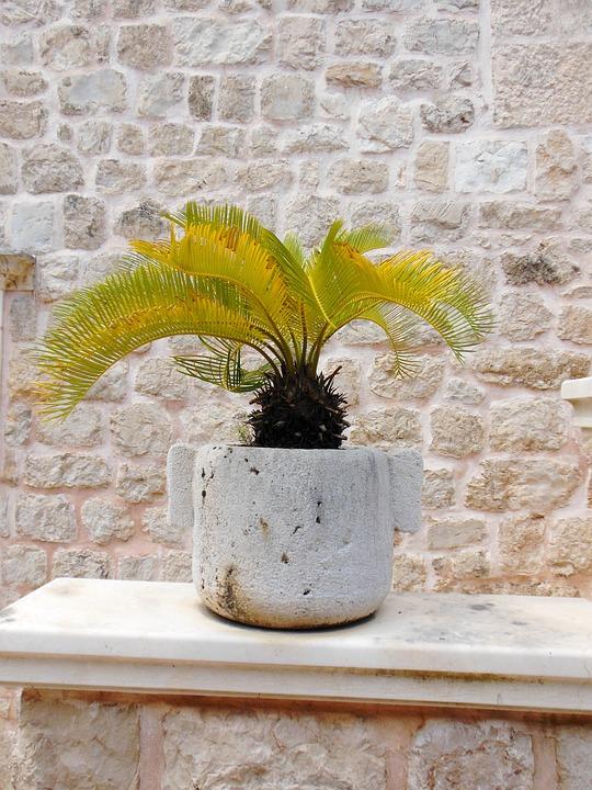 Palm, Stone, Pot, Plant, Vase, Wall, Flora, Decoration